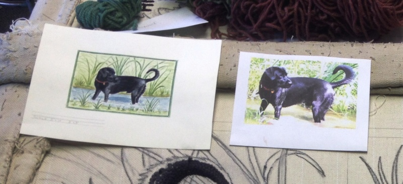 Photo of the Black Lab and the sketch for reference